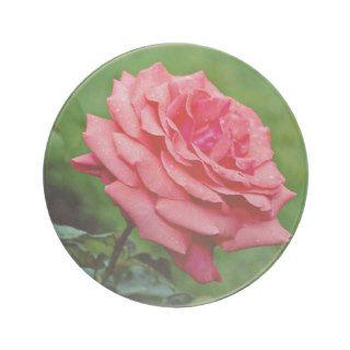 Hybrid Tea Rose 'Fragrant Cloud' White flowers Drink Coaster
