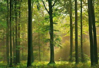 Fototapete Autumn Forest, Herbst Wald, 8 teilig, 366 x 254 cm, gestochen scharfe XXL Ansichten verf�gbar Querformat, Bildtapete, Fotowand, Poster Tapete Baumarkt
