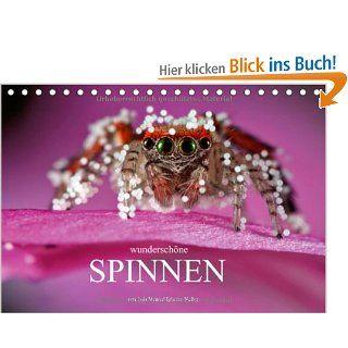 Wundersch�ne Spinnen Tischkalender 2014 DIN A5 quer : Die verborgene Sch�nheit der Spinnen Tischkalender, 14 Seiten: Luis Manuel Iglesias Nu�ez: Bücher