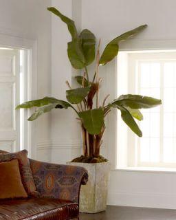 Natural Banana Tree   John Richard Collection