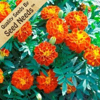 """200 Flower Seeds, French Marigold """"Bolero"""" (Tagetes erecta) Seeds By Seed Needs  Flowering Plants  Patio, Lawn & Garden"""