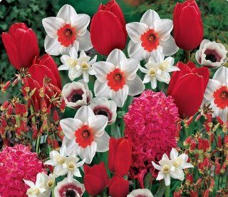 Item# 10152   (35 Bulbs) Season Long Red Carpet Mix   Flower Garden     FALL PLANTING   SPRING FLOWERS    Flowering Bulbs Include: A specially selected garden of Red, White, Red & White flowers that will brighten your garden all season long! Various Si