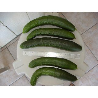 Sweet Success Hybrid Cucumber Seeds   Cucumis Sativus   0.5 Grams   Approx 15 Gardening Seeds   Vegetable Garden Seed   Cucumber Plants