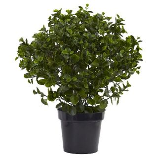 Peperomia Plant UV Resistant (Indoor/Outdoor)   Green (28 )