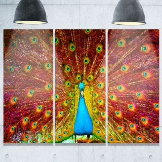 Designart   Peacock Dancing   Animal Photography Glossy Metal Wall Art